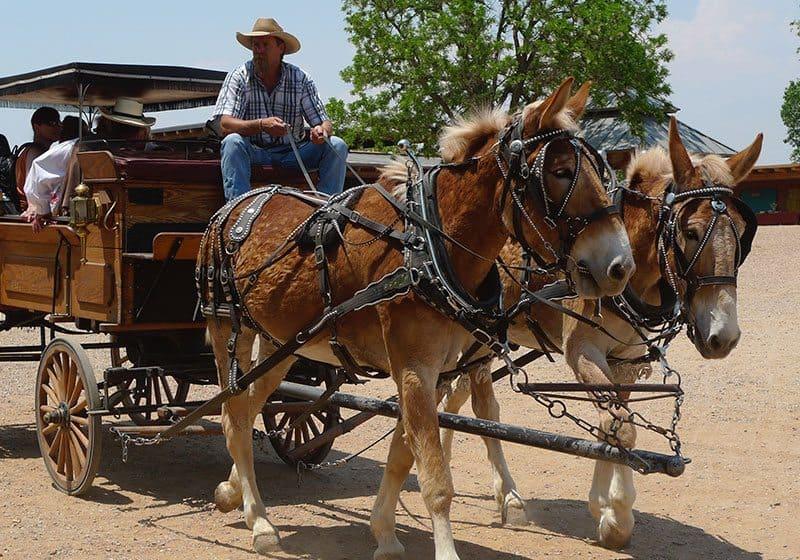 Summer Festival & Wild West Adventures