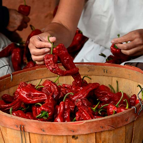 Making Chile Ristras